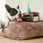 ワンちゃんのための安心・安全スペース ♪ 快適空間犬用ベッドのサムネイル画像
