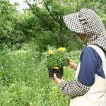 【ガーデニング用におススメの帽子】日差しや虫から守ってくれる!のサムネイル画像