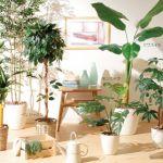 部屋のインテリアにぴったり!人気の観葉植物をご紹介します!!のサムネイル画像