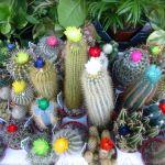 可愛い花を咲かせたい!サボテンの可愛い花を咲かせる育て方 のサムネイル画像