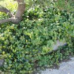 ガーデニング初心者にもおすすめ、日光要らずの日陰の植物特集のサムネイル画像