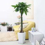 簡単に育てられる植物って何?暮らしに植物を取り入れよう!のサムネイル画像