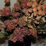 バラのドライフラワーが素敵!バラのドライフラワーの作り方&飾り方のサムネイル画像