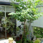 お庭や玄関を素敵に彩る!室外で育てられる観葉植物をまとめました☆のサムネイル画像