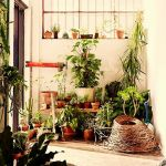 冬の寒さでも枯れない!寒さに強い観葉植物をまとめてみました☆のサムネイル画像