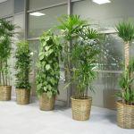 観葉植物を育てる!初心者向けの観葉植物と育て方をご紹介。のサムネイル画像