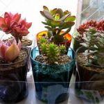多肉植物とガラスのコンビで可愛くおしゃれなインテリアにしようのサムネイル画像