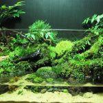 アクアテラリウムのレイアウトを考えて、おしゃれな水槽を作ろう☆のサムネイル画像