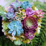 魅力いっぱい♡多肉植物のカラフルな寄せ植えで心の中からHAPPYに!のサムネイル画像