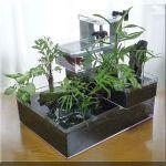 アクアテラリウムで、観葉植物を育てようとするときに注意することのサムネイル画像