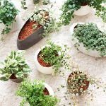 魅了されること間違いなし!かわいいと話題の観葉植物たち4選のサムネイル画像