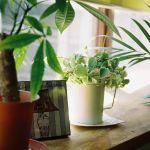 室内でお手入れ簡単!100均で始められる観葉植物のある暮らし♡のサムネイル画像