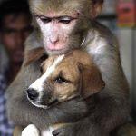 【共演NG】え!あの二人って仲悪かったの!?驚くべき芸能人の犬猿の仲まとめ【9組】のサムネイル画像