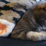 【猫大好き】かわいい♡オモシロ♡今すぐ買える猫柄の靴下のまとめのサムネイル画像