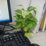 職場に、学習机に!机に観葉植物を置くメリット&オススメの観葉植物のサムネイル画像