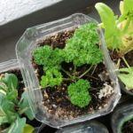 冬でも野菜を育てたい!冬でもできるベランダ菜園をご紹介☆のサムネイル画像
