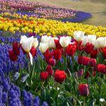 春の過ごしやすい時期にガーデニングを楽しもう☆春におすすめの花☆のサムネイル画像