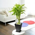 光触媒?光源は何がいい?観葉植物と光の関係についてリサーチ!のサムネイル画像
