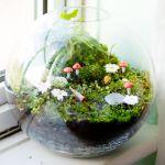 苔までもがオシャレに!テラリウムで苔や多肉植物を素敵に育てよう!のサムネイル画像