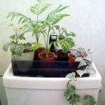 トイレに観葉植物を置いて爽やかに!トイレにオススメの観葉植物のサムネイル画像