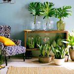 生活に自然を取り入れよう!部屋に置きたいオシャレな観葉植物☆のサムネイル画像
