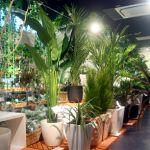 人口全国第3位となる名古屋でおススメの観葉植物のお店はどこ?のサムネイル画像