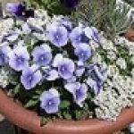 家庭菜園で花を植えよう!初心者でもわかる家庭菜園の始め方♪のサムネイル画像