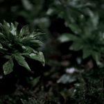 霧で演出する幻想的なアクアテラリウムで生活に癒しを作ろう!のサムネイル画像