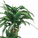 まるで本物の観葉植物!ニトリの人工観葉植物の値段をまとめました♪のサムネイル画像
