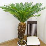 南国風の観葉植物を集めて、書いてみました!いかがでしょうか?のサムネイル画像