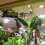 インテリアとしても大活躍の観葉植物!横浜で人気の販売店は?のサムネイル画像