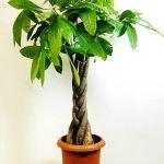 都会のオアシス!観葉植物がある都内新宿区で自然を感じましょう。のサムネイル画像