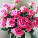バラの香りで癒される【ローズシャンプー】人気の秘密とおすすめ10選のサムネイル画像
