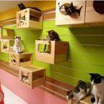 DIYで出来る!高いところ大好きな猫ちゃんのためのキャットウォークのサムネイル画像