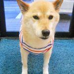 ペットの服も春色にしよう♡犬の洋服ってこんなにかわいい!!のサムネイル画像