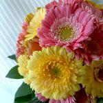カラフルな魅力で人気【ガーベラ】の花束や色で表す花言葉は?のサムネイル画像