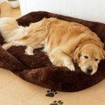 犬の寝床だってこだわりたい!敢えて言います、ワンダフルベッド特集のサムネイル画像