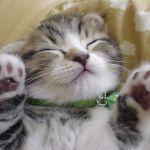猫をペットとして飼う人の数が急増中!そのツンデレな魅力とは?のサムネイル画像