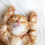 猫好きさんあつまれ♪猫グッズで雑貨もおやつも猫三昧しましょ♡のサムネイル画像