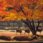 奈良でデートならカフェ巡りで決まり!奈良のおしゃれカフェ7選!のサムネイル画像