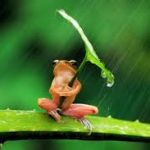 その仕草、姿がとてもかわいらしい☆カエルの置物を紹介します☆のサムネイル画像
