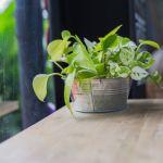 人気の観葉植物で見る、おしゃれで可愛いプランターをインテリアに!のサムネイル画像