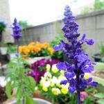 ガーデニングを始めたら、開花時期で決める!年間楽しめる庭の花選びのサムネイル画像