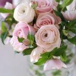 挿し木で好きなバラを増やしてみよう!バラに彩られた生活のススメ!のサムネイル画像