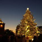 クリスマスツリーの木は、どんな木なんだろう。ちょっと見てみよう♡のサムネイル画像