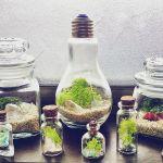 小さな世界に引き込まれる♡ガラステラリウムを作ってみよう♡のサムネイル画像