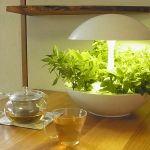 LEDで野菜を栽培?リビングでかわいい植物工場ができる時代に!のサムネイル画像