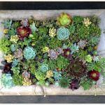 土を上手に理解してあなただけの寄せ植えに挑戦してみましょう♡のサムネイル画像