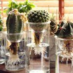 涼しげな雰囲気に癒されたい♡植物の水栽培の方法が気になる!!のサムネイル画像