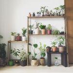 お部屋の一角がまるで植物園に。自分好みに観葉植物を棚に飾ろう♪のサムネイル画像